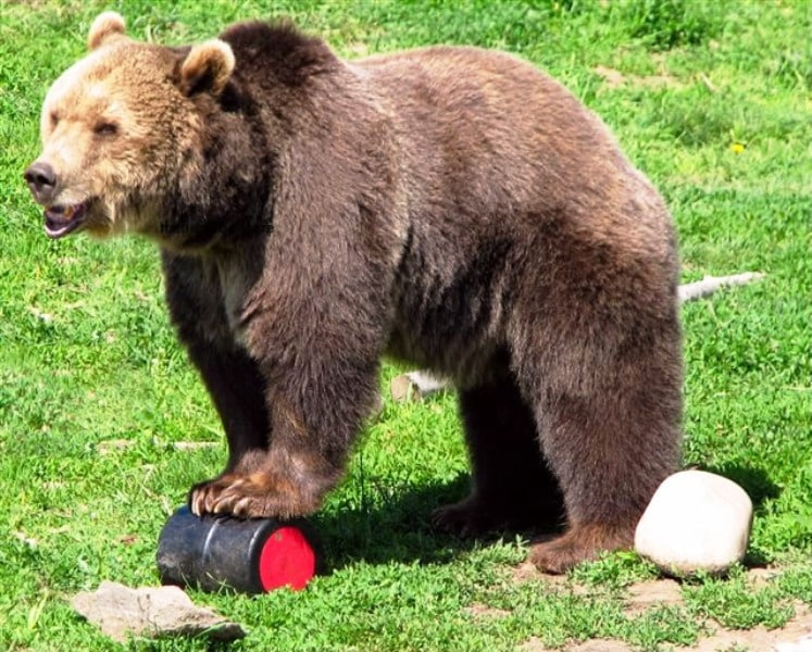 Bear and Bear Container