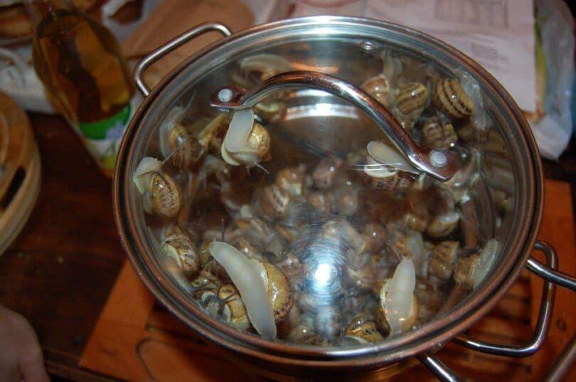 Sealed Snails