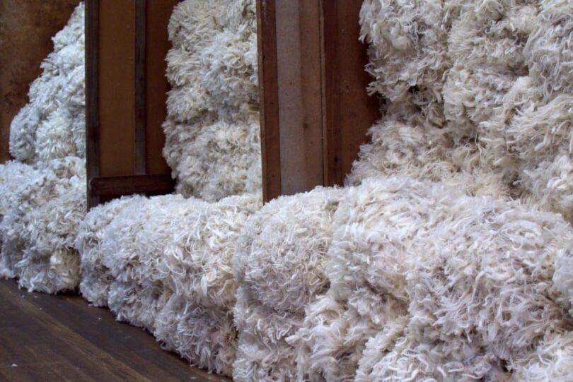 Tasmanian Merino Wool
